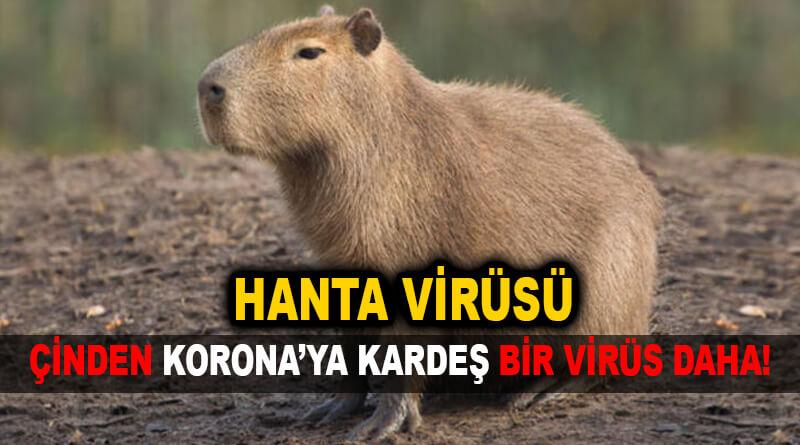 HANTA virüsü